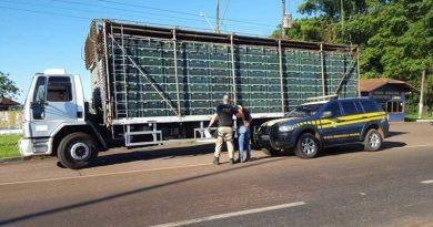 PRF encontra 2,8 toneladas de maconha em fundo falso de caminhão